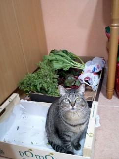 gata caja verdura